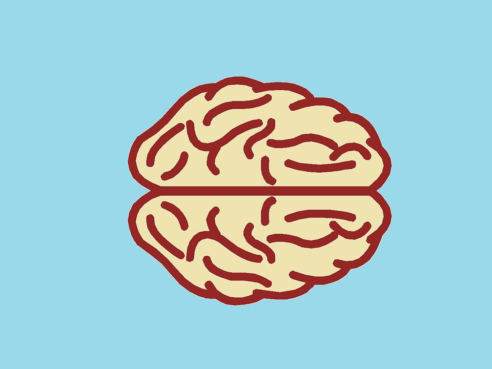 brain_blog.png
