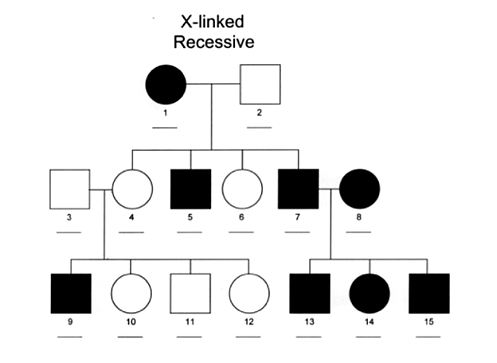Tips For Interpreting Pedigree Charts And Understanding