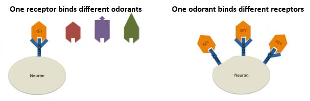 odor2.png